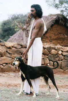 Know Our Own Dog Breeds, Kombai, Kanni, Alangu, Chippiparai and ...